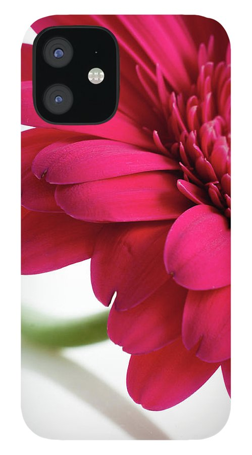 Flowerbed IPhone 12 Case featuring the photograph Gerbera Daisy by Subman