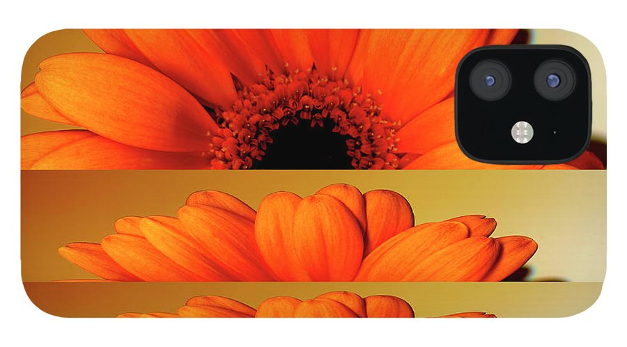 Orange Color IPhone 12 Case featuring the digital art Gerbera Flower As Rising Sun by Eversofine