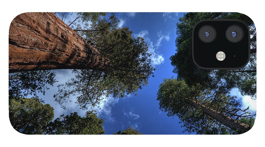 Sequoia Tree IPhone 12 Case featuring the photograph Giant Sequoias - 2 by Rhyman007