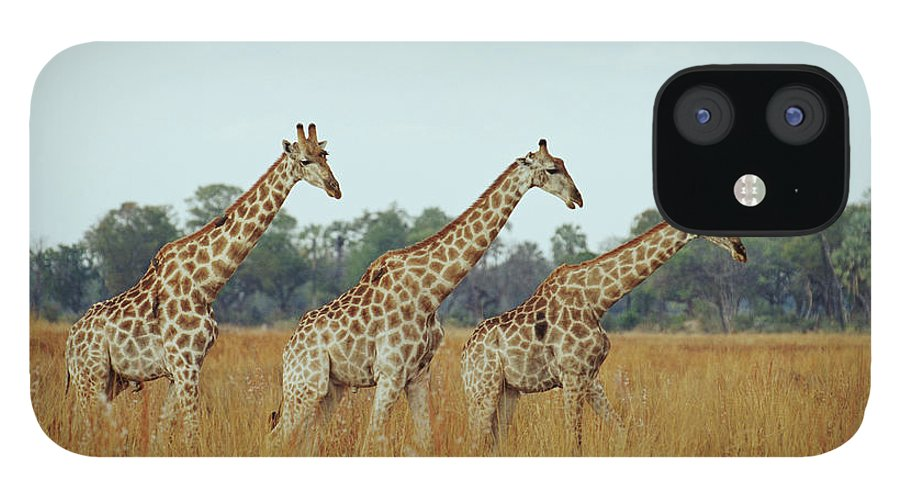 Horned iPhone 12 Case featuring the photograph Giraffe Herd, Botswana by Tim Graham