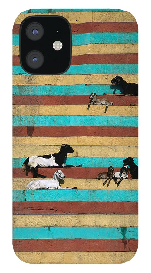 Steps IPhone 12 Case featuring the photograph Goats Resting On The Tulsi Ghats by Anders Blomqvist