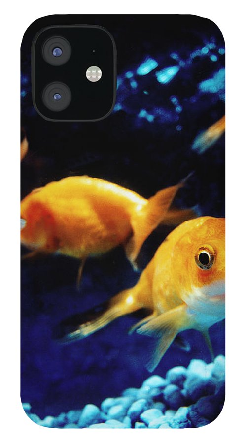 Pets IPhone 12 Case featuring the photograph Goldfish In Fish Tank by Silvia Otte