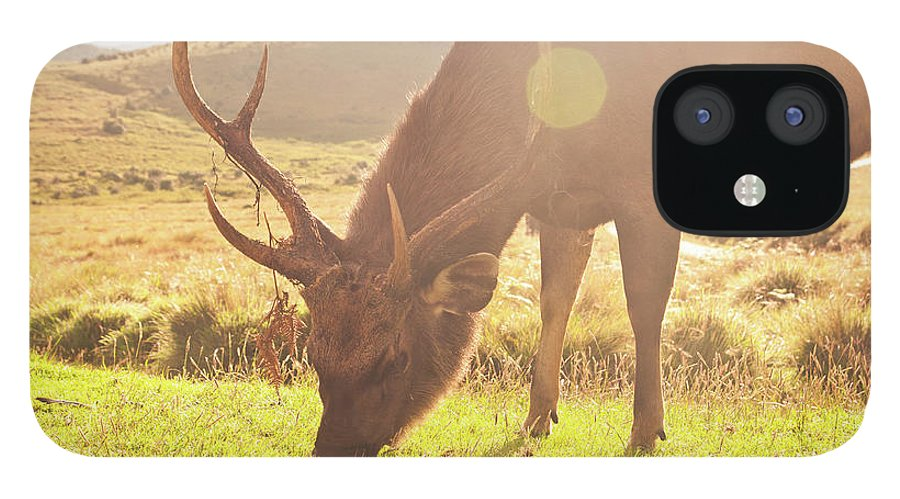 Horned iPhone 12 Case featuring the photograph Grazing Deer by Flash Parker