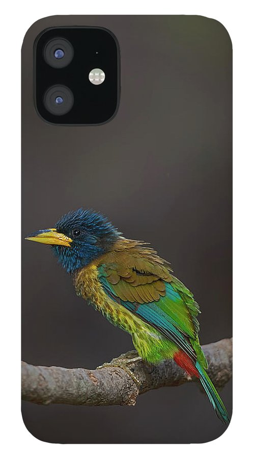 Bird Images For Print IPhone 12 Case featuring the photograph Great barbet by Uma Ganesh