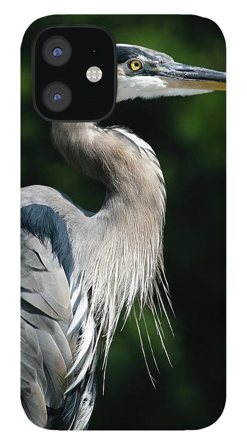 North Carolina IPhone 12 Case featuring the photograph Great Blue Heron by Bill Swindaman