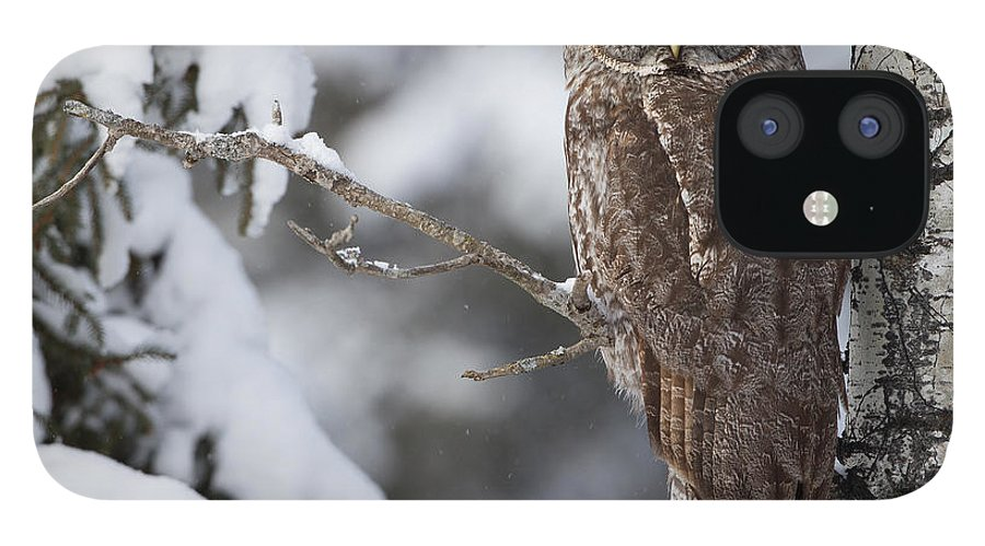 Snow IPhone 12 Case featuring the photograph Great Grey Owl by Corey Hayes
