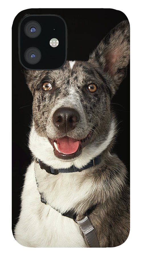 Pets IPhone 12 Case featuring the photograph Grey And White Australian Shepherd With by M Photo