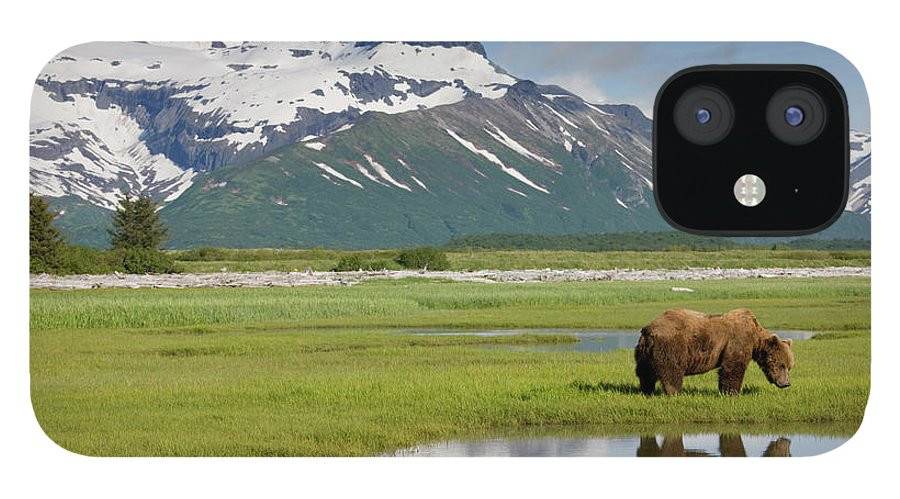 Brown Bear IPhone 12 Case featuring the photograph Grizzly Bear, Katmai National Park by Paul Souders