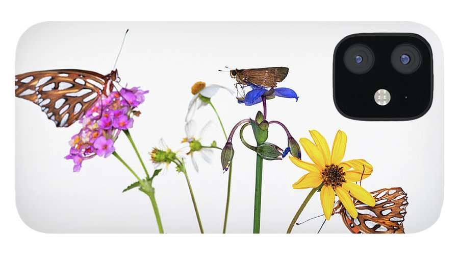 White Background IPhone 12 Case featuring the photograph Gulf Fritillary And Brown Skipper by Jim Mckinley