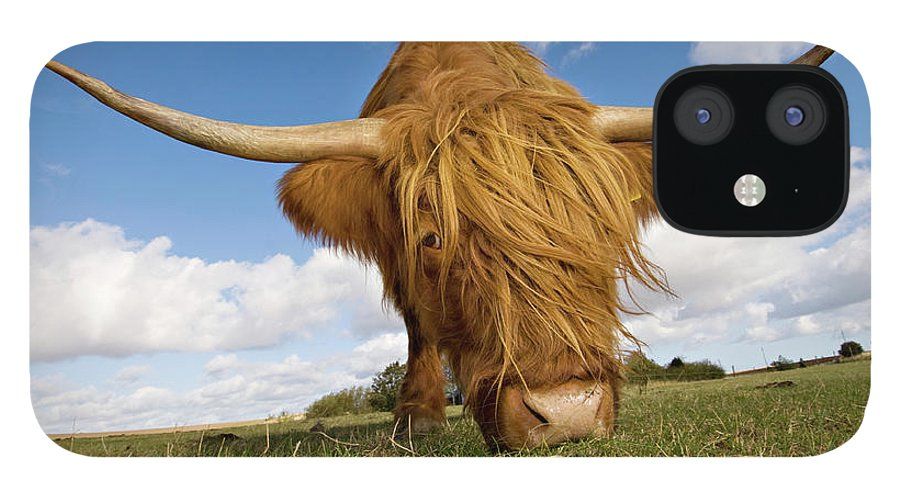 Horned IPhone 12 Case featuring the photograph Hairy, Horned, Highland Cow Grazing by Clarkandcompany