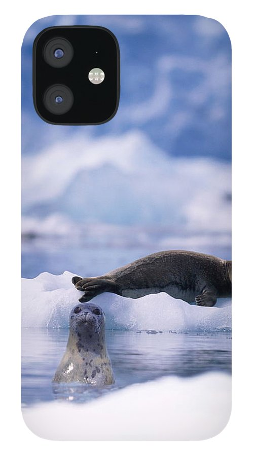 Animal Themes iPhone 12 Case featuring the photograph Harbor Seal Phoca Vitulina In Glacial by Paul Souders