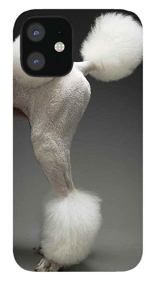 Pets IPhone 12 Case featuring the photograph Haunches Of Poodle, On Grey Background by Moodboard