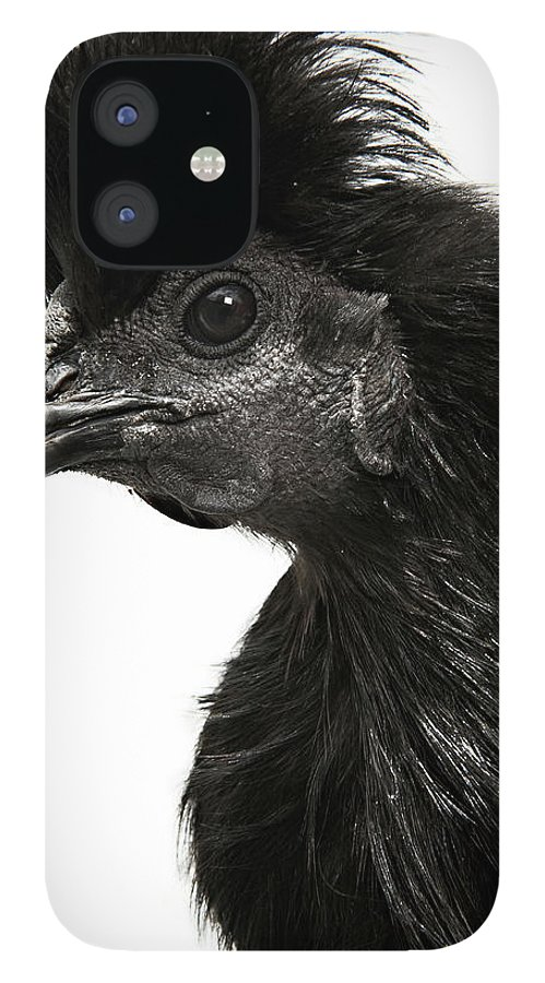 White Background IPhone 12 Case featuring the photograph Hen by Adrian Green