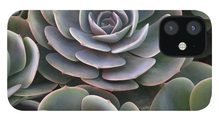 Scenics IPhone 12 Case featuring the photograph Hens And Chicks Plant Full Frame by Sassy1902