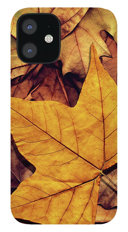 Orange Color IPhone 12 Case featuring the photograph High Resolution Dry Maple Leaf On by Miroslav Boskov