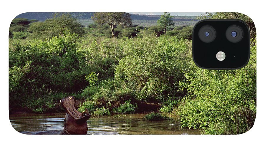 Scenics IPhone 12 Case featuring the photograph Hippopotamus Emerging From Water, Mouth by James Warwick