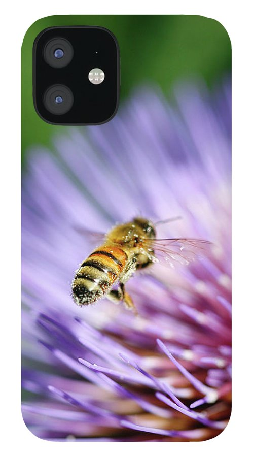 Scenics iPhone 12 Case featuring the photograph Honey Bee by Filo