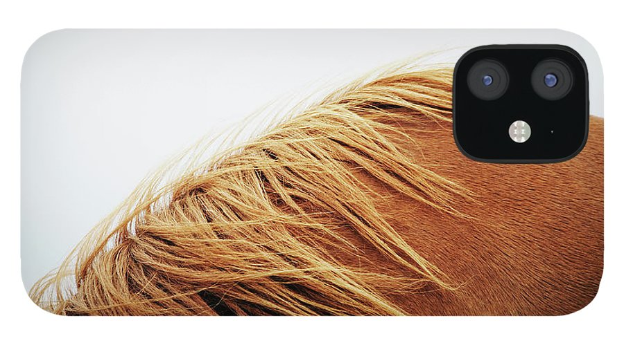 Animal Themes iPhone 12 Case featuring the photograph Horse, Close-up by Markus Renner