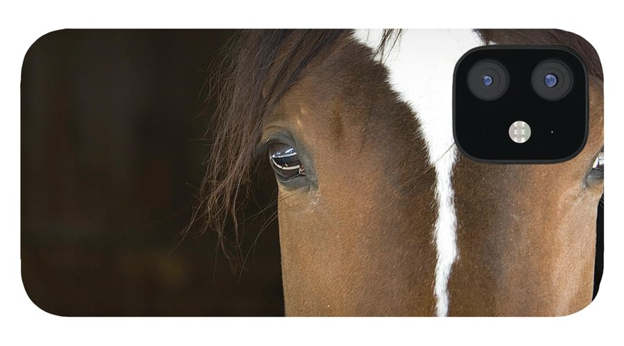 Horse IPhone 12 Case featuring the photograph Horse Head by Rterry126