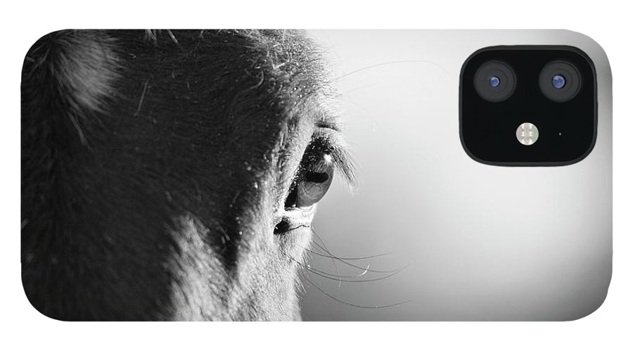 Horse IPhone 12 Case featuring the photograph Horse In Black And White by Malcolm Macgregor