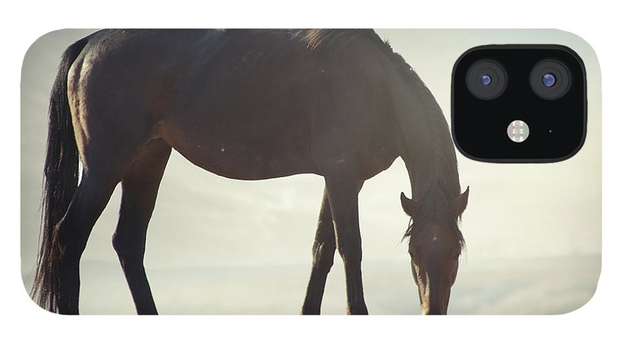 Horse IPhone 12 Case featuring the photograph Horse In Wild by Arman Zhenikeyev - Professional Photographer From Kazakhstan
