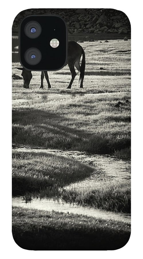 Horse IPhone 12 Case featuring the photograph Horse by Muratseyit