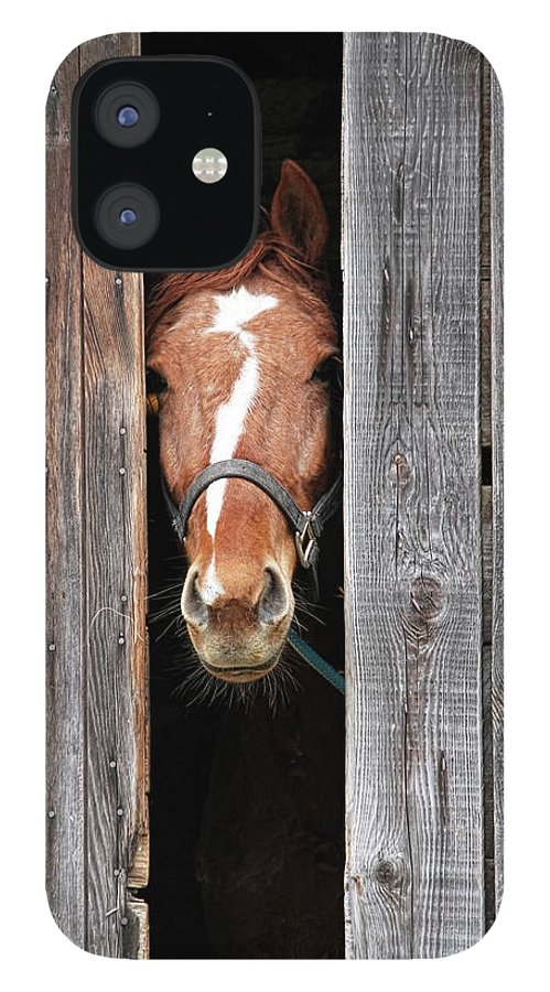Horse IPhone 12 Case featuring the photograph Horse Peeking Out Of The Barn Door by 2ndlookgraphics