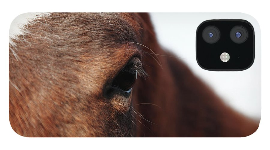 Horse IPhone 12 Case featuring the photograph Horse Portrait by R-j-seymour
