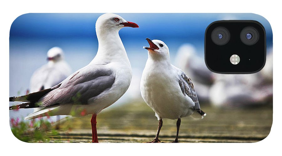 Animal Themes iPhone 12 Case featuring the photograph Hungry Gull by Ignacio Hennigs