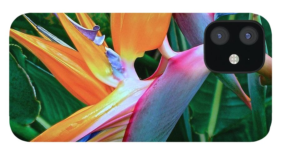 Bird Of Paradise iPhone 12 Case featuring the photograph Intertwine by James Temple