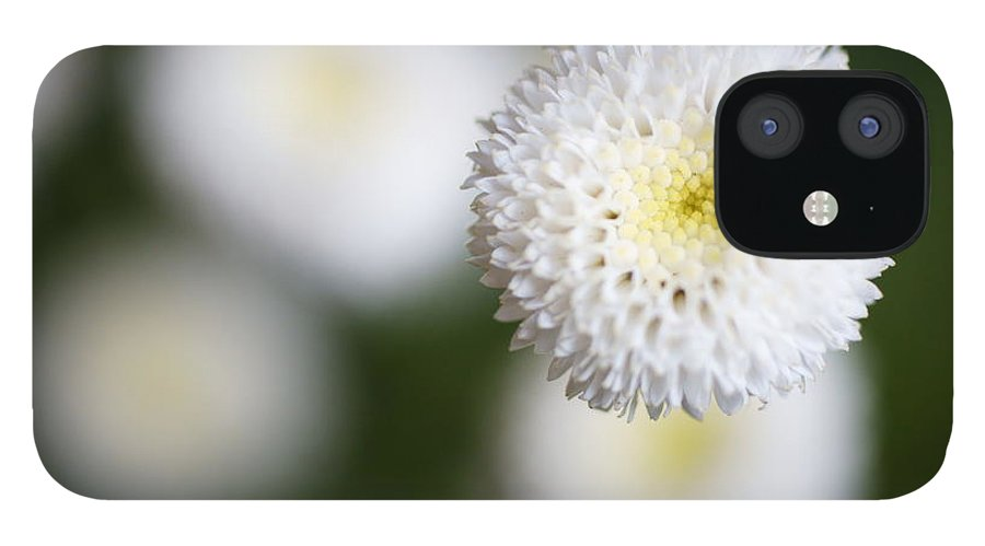 Bud iPhone 12 Case featuring the photograph Isolated White Flower Bud by Tim Green