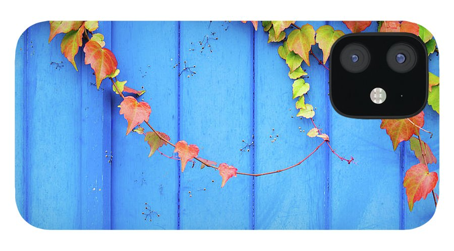Architectural Feature IPhone 12 Case featuring the photograph Ivy On The Door by Zianlob