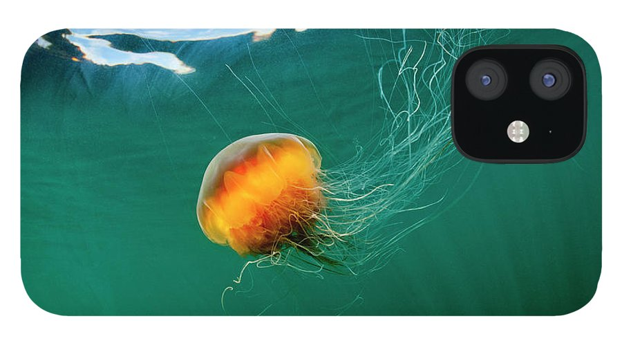 Underwater IPhone 12 Case featuring the photograph Jellyfish, Alaska by Paul Souders