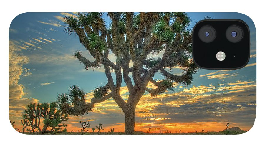 Scenics IPhone 12 Case featuring the photograph Joshua Tree At Sunrise by Photograph By Kyle Hammons