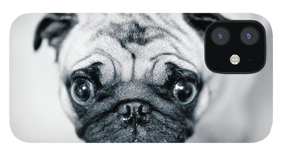 Pets IPhone 12 Case featuring the photograph Just Enough by Eddy Joaquim