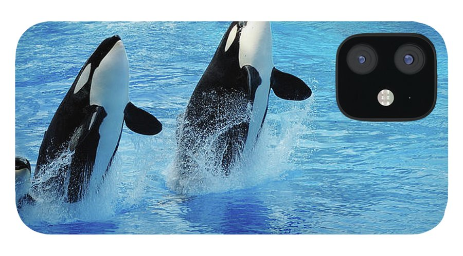 Panoramic iPhone 12 Case featuring the photograph Killer Whale Family Jumping Out Of Water by Purdue9394