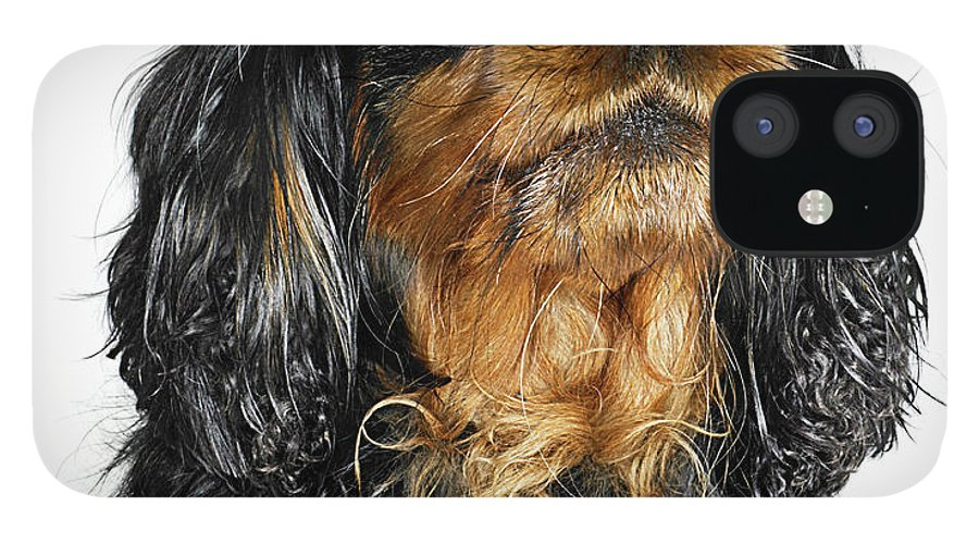 Pets IPhone 12 Case featuring the photograph King Charles Cavalier Portrait by Gandee Vasan