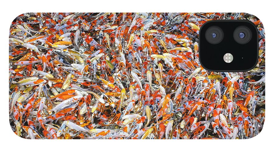 Pets IPhone 12 Case featuring the photograph Koi Jigsaw by Chris Edwards