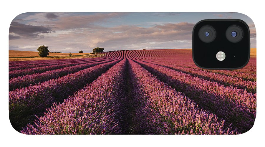 Scenics IPhone 12 Case featuring the photograph Lavender Field by Paul Baggaley