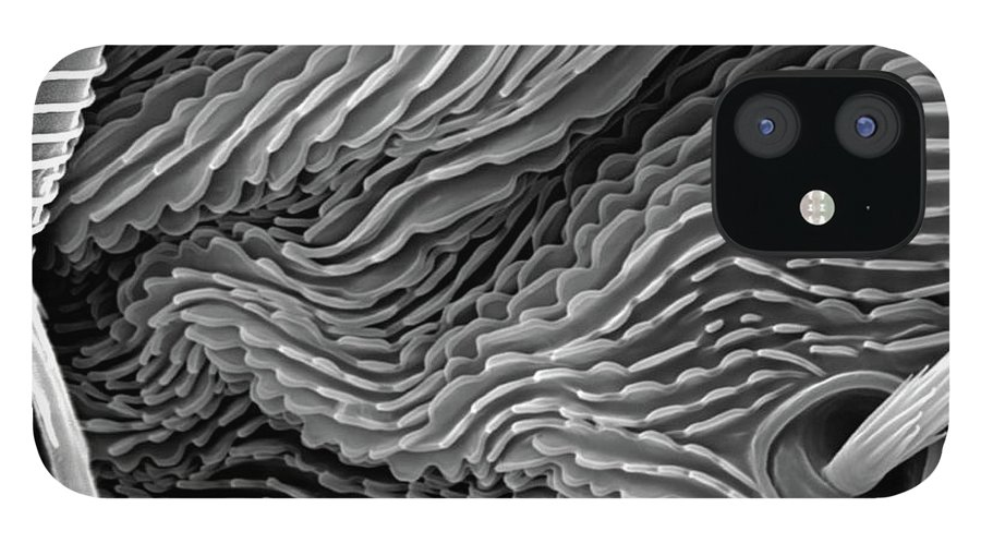 Microscope IPhone 12 Case featuring the photograph Lavender Leaf, Springtail, Sem by Sheri Neva