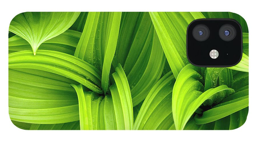 Grass IPhone 12 Case featuring the photograph Leaves Drops Green by Vladimirovic
