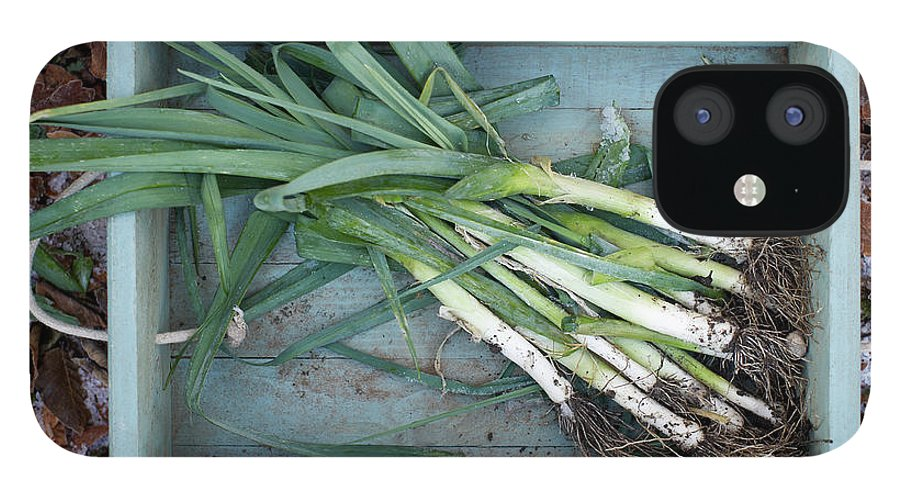 Outdoors IPhone 12 Case featuring the photograph Leeks In Wooden Box On A Frosty Winter by Dougal Waters