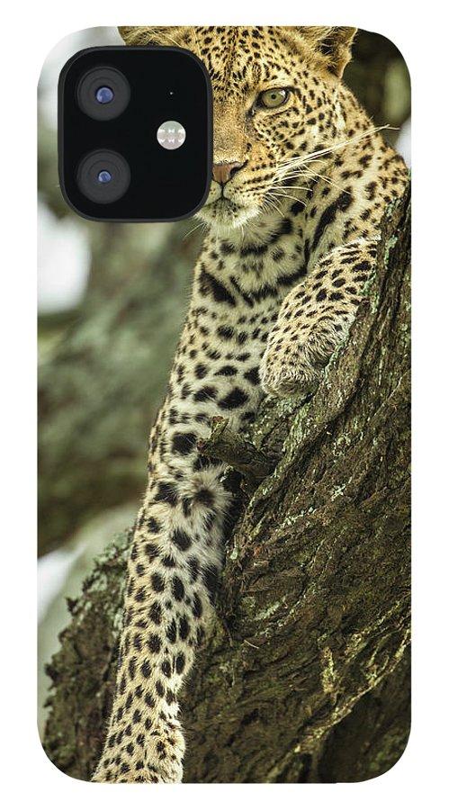Dawn iPhone 12 Case featuring the photograph Leopard, Ndutu Plains, Tanzania by Paul Souders