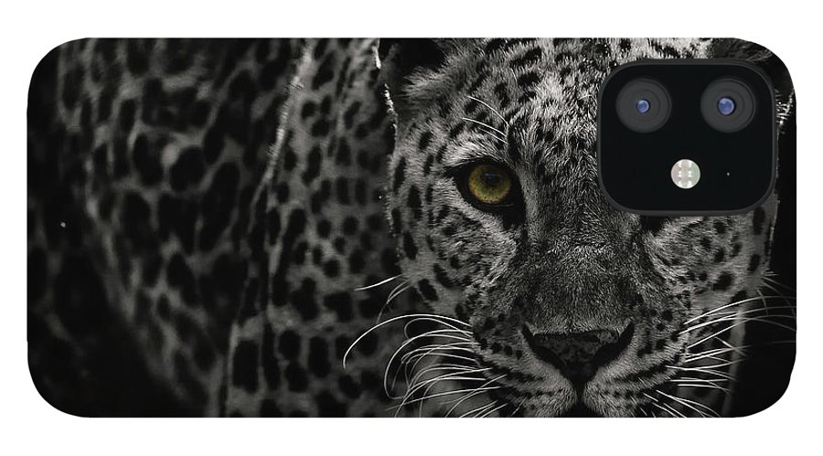 Big Cat IPhone 12 Case featuring the photograph Leopard by Somak Pal