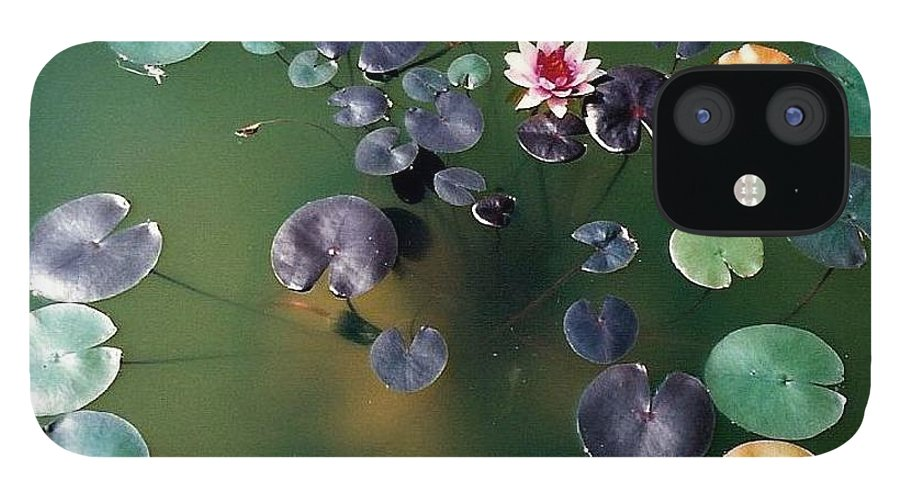 1980-1989 IPhone 12 Case featuring the photograph Lillypad by Margherita Wohletz