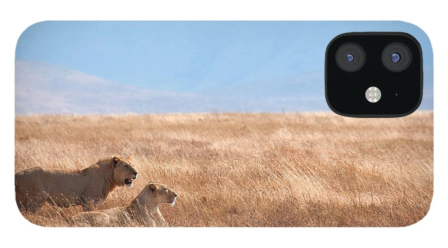 Scenics iPhone 12 Case featuring the photograph Lion Couple In Ngorongoro Crater by Ceneri