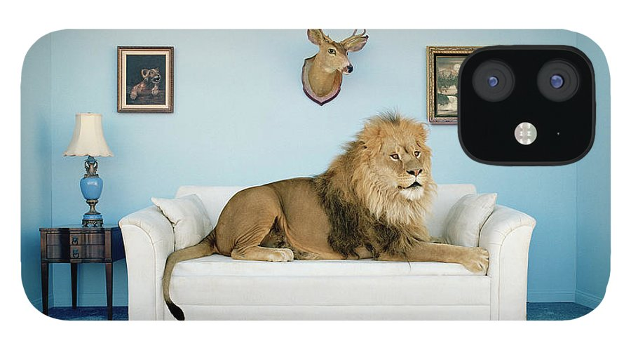 Pets IPhone 12 Case featuring the photograph Lion Lying On Couch, Side View by Matthias Clamer