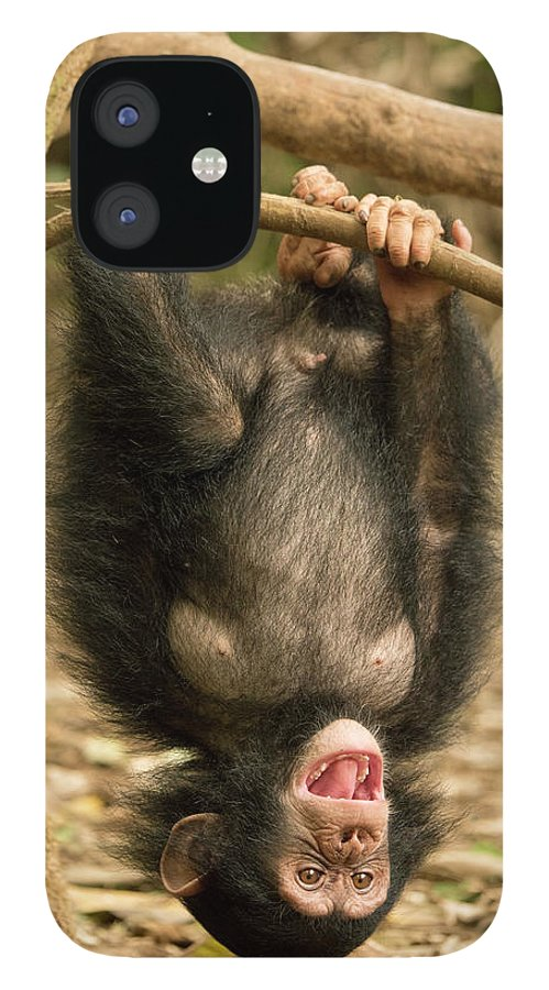 Gerry Ellis iPhone 12 Case featuring the photograph Little Larry Playing In Forest by Gerry Ellis