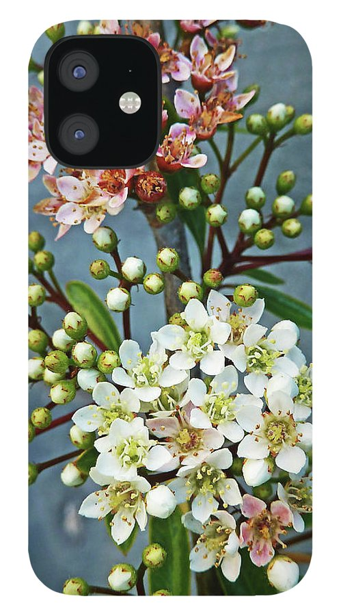 Bud iPhone 12 Case featuring the photograph Little Star Like Buds by Steve Taylor Photography