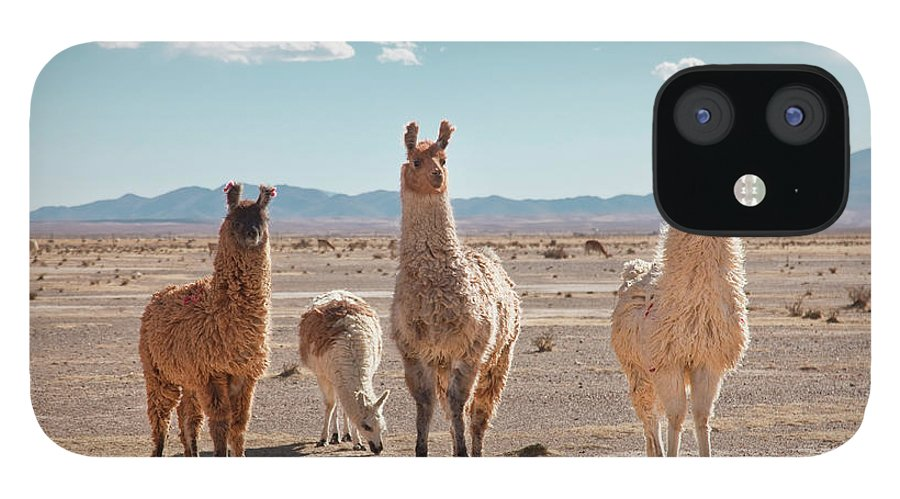 Shadow IPhone 12 Case featuring the photograph Llamas Posing In High Desert by Kathrin Ziegler